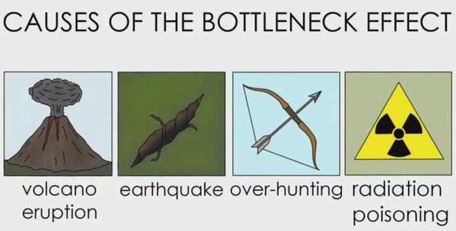 Con người đã từng đứng trước bờ vực của sự tuyệt chủng? - Ảnh 5.