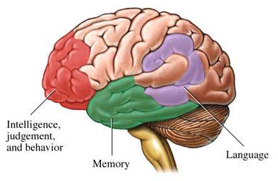 Bộ não con người và những điều khoa học chưa thể giải thích (Phần I)