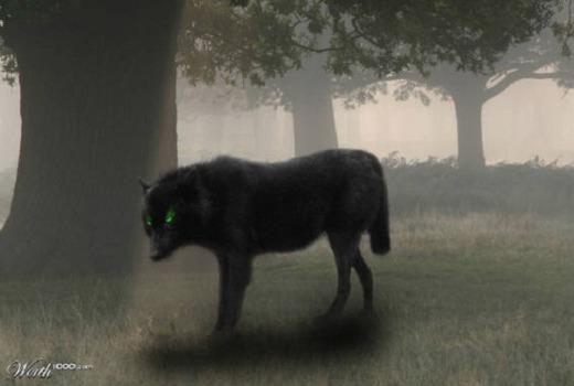 Những sự thật ít được biết đến về loài sói 8