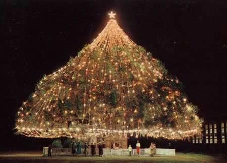 Lớn nhất thế giới Living Christmas Tree (Wilmington, NC)