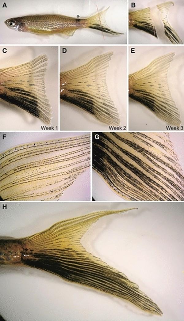 Một loạt động vật có khả năng tự mọc lại đầu, đuôi khi bị đứt 3