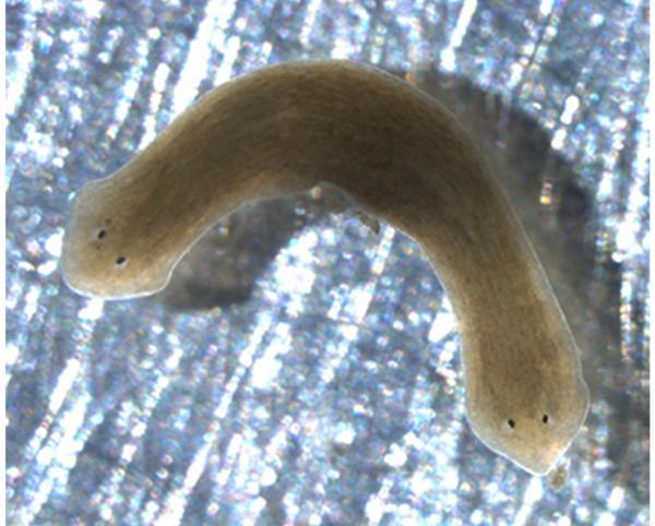 Một loạt động vật có khả năng tự mọc lại đầu, đuôi khi bị đứt 7