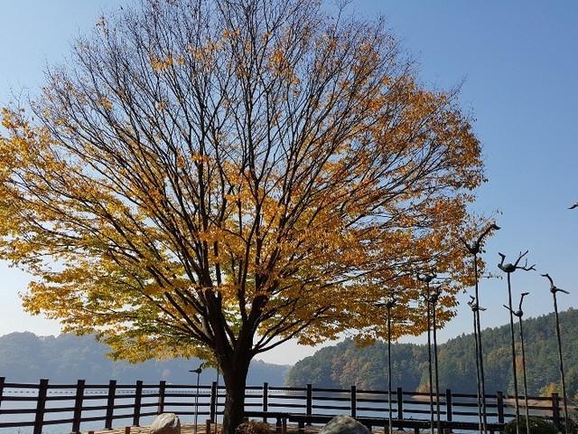 Camera Note 4 thể hiện xuất sắc sắc vàng của lá, màu xanh của không gian...