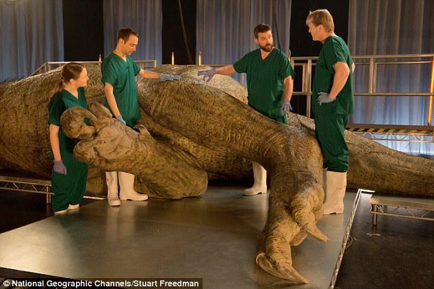 Khám nghiệm tử thi: Các nhà khoa học sẽ phân tích một mô hình với kích thước của một con Tyrannosaurus Rex trong một thí nghiệm chưa từng có