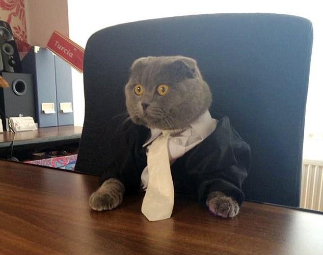 Chú mèo Bossy hiện là giám đốc truyền thông của công ty Catbox.