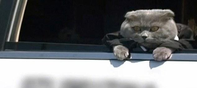 Catbox.ro báo cáo đã thuê một xe limousine để đưa Bossy làm việc cho ngày đầu tiên của ông về công việc đầu tiên của mình