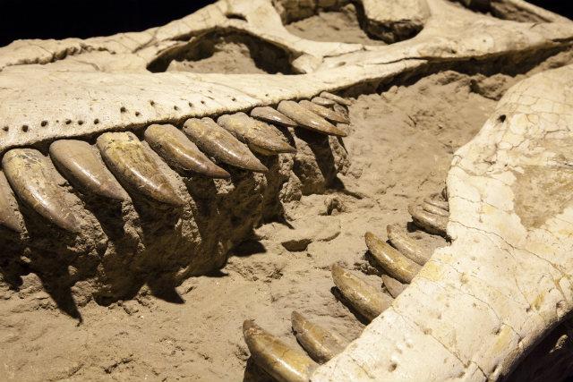 5 cuộc đại tuyệt chủng của Trái đất đã khiến rất nhiều loài sinh vật biến mất mãi mãi.