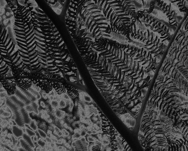 Đơn giản chỉ là một cây dương xỉ nhưng tấm ảnh này khiến nhiều người xem ngỡ tưởng đang nhìn một bức tranh trừu tượng. Ảnh chụp bởi Dan Lythcott-Haims.