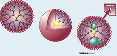 Các hạt nano dendrimer sẽ đóng gói vắc-xin và mang chúng đến mục tiêu