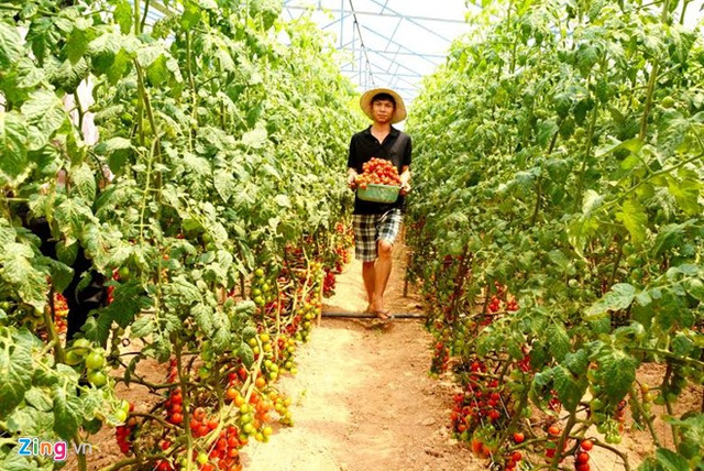 Trang trại nông nghiệp công nghệ cao của anh em Cao Văn Duy và Cao Văn Khánh. Ảnh: Thạch Thảo.