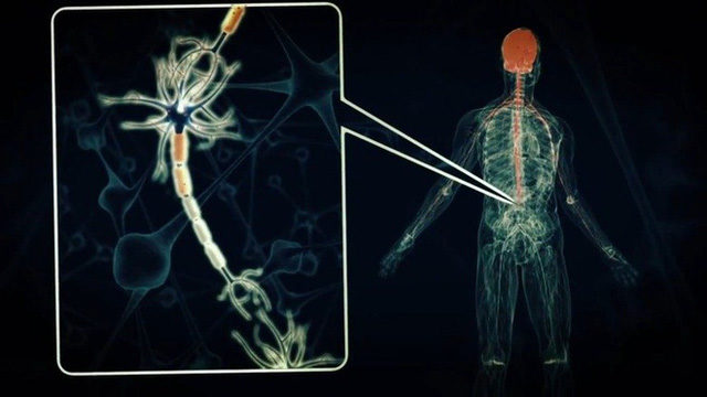 Chất độc thần kinh này sẽ làm tê liệt toàn bộ cơ thể người, gây ngừng thở rồi tử vong. Hình minh họa.