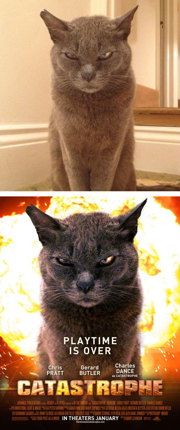 1. Hết giờ chơi rồi, đây là giờ của mèo nguyên tử!