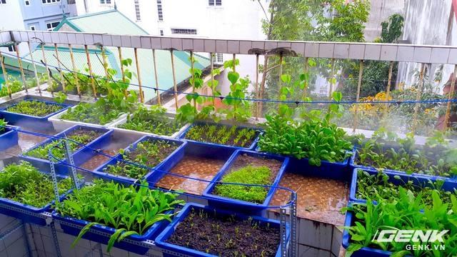 Một vườn rau xum xuê với số lượng chậu trồng khoảng 15, đủ cung cấp rau ăn cho 1 gia đình gồm 02 người lớn và 01 trẻ em