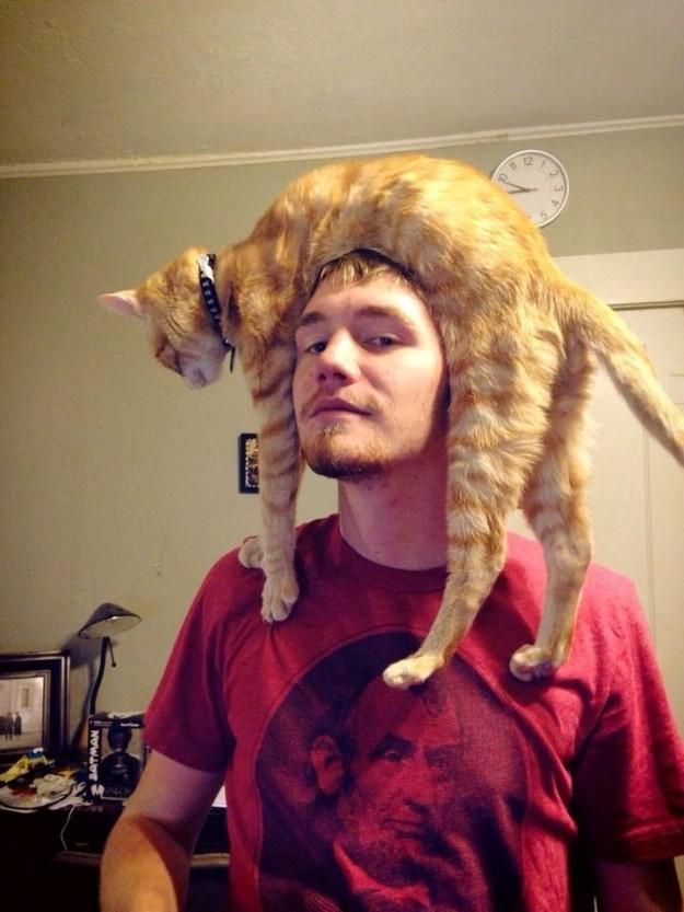 3. Mèo - loài thú cưng đầu đội trời chân đạp đất.