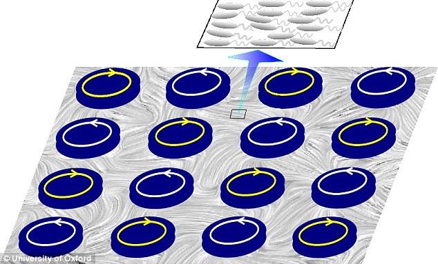 Bằng cách sử dụng giả lập máy tính các nhà khoa học nhận thấy rằng vi khuẩn giúp xoay rô tơ giống như cách cối xay gió hoạt động. Trong ảnh vi khuẩn (bạc) đang xoay xung quanh các rô tơ khiến chúng xoay theo chiều ngược lại. Nghiên cứu cho thấy vi khuẩn có thể được sử dụng trong các nhà máy điện mini trong tương lai,