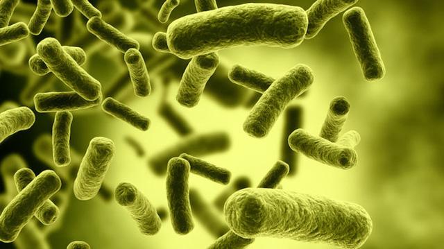 Vi khuẩn Clostridium botulinum chụp dưới kính hiển vi màu. Ảnh: Gizmodo.