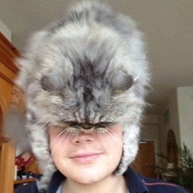 4. Mũ lông sang chảnh cũng có thể diện trong mùa hè.