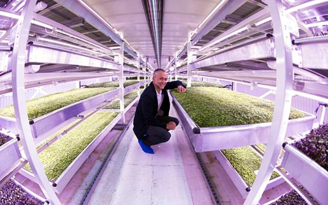 Ý thức được giá trị tiềm tàng của căn hầm, Richard Ballard và Steven Dring đã nảy ra ý tưởng biến nó thành nông trang trồng rau sạch phục vụ cho các nhà hàng trong thành phố.