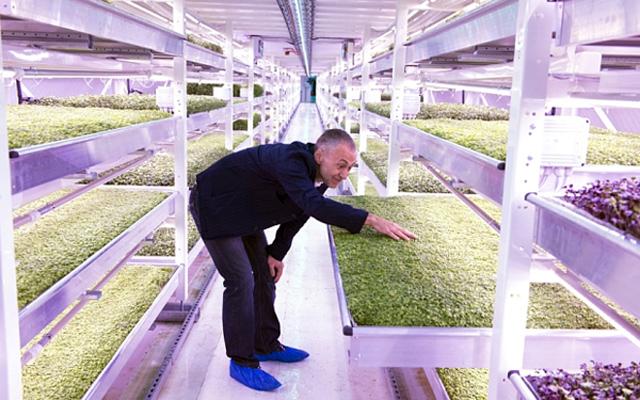 """""""Khi nó còn là hầm tránh bom, nhiều chiếc giường tầng được đặt ở đây cho mọi người. Và bây giờ, chúng tôi đang tận dụng nó để tiết kiệm diện tích trồng rau cung cấp cho người dân London"""", Billard chia sẻ."""