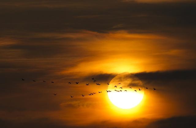 Nhiều loài chim sẽ chết do không tìm được đường đến nơi di cư.