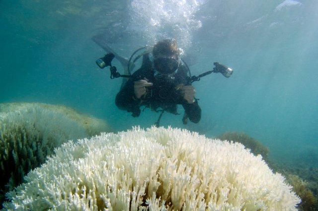 Một nhà khoa học đang ghi lại hình ảnh một rạn san hô lửa bị tẩy trắng ở vùng biển Bermuda.