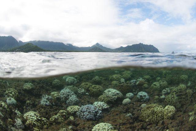 Tấm ảnh thể hiện sự tẩy trắng san hô ở vịnh Kaneohe nổi tiếng của Hawaii.