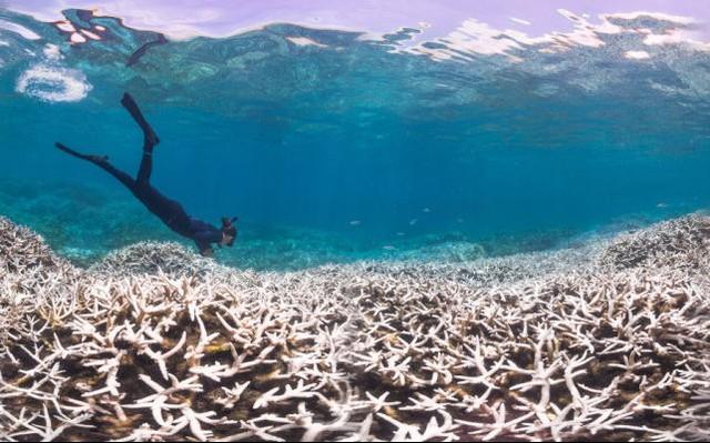 Alice Lawrence, một nhà sinh học biển, đang xem xét mức độ bị tẩy trắng của chuỗi san hô tại quần đảo Samoa.