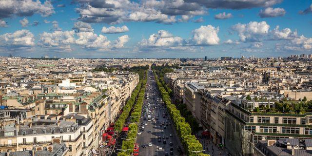 Liệu cây xanh có thực sự giúp làm sạch không khí trong thành phố?