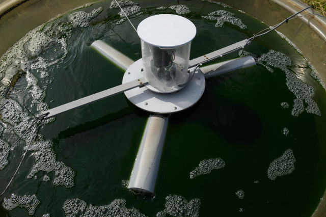 Nhiều loài tảo xấu xa không thể sử dụng làm năng lượng.
