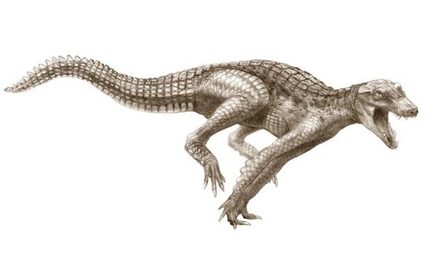 Cá sấu đã từng chạy trên cạn như ngựa