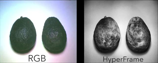 Dùng máy ảnh HyperCam để phân biệt độ chín của quả bơ.