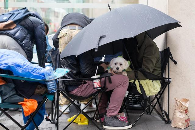 Thậm chí ngay cả những chú cún cưng cũng được theo chủ tới xếp hàng tại Sydney, Úc.