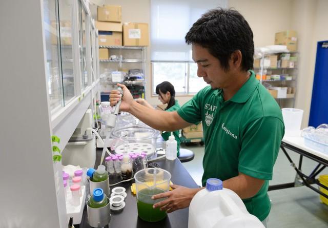 Chuyên gia tại Euglena đang nghiên cứu biến tảo thành năng lượng.