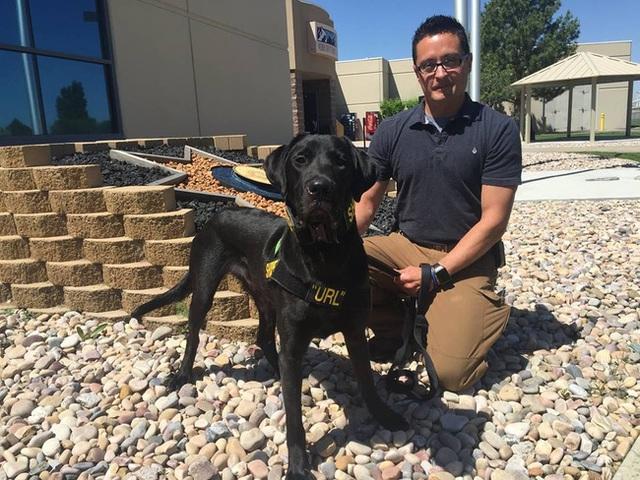 Chú chó quét phim đen đầu tiên ở bang Utah, Mỹ.