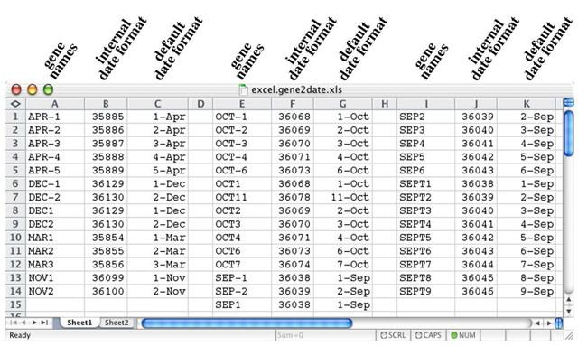 Phần mềm bảng tính Microsoft Excel, khi được sử dụng với chế độ mặc định sẽ chuyển đổi tên gen thành ngày và các số chấm nổi.