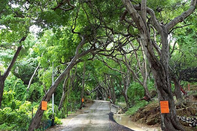 Không nên đi dưới con đường này khi trời mưa