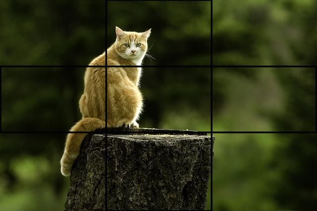 Qui tắc một phần ba được sử dụng phổ biến khi bố cục ảnh.