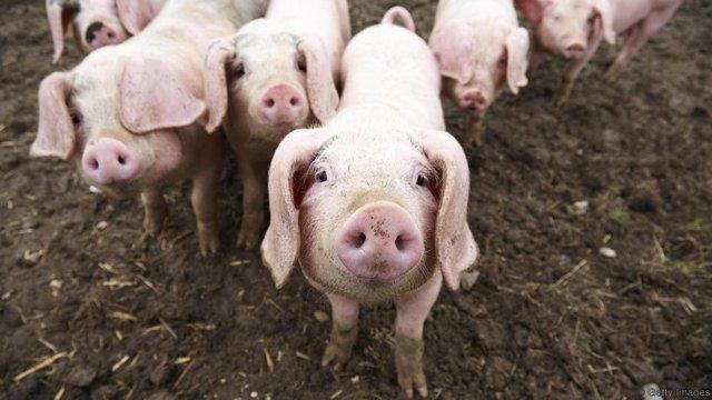 Thử nghiệm trên cột sống lợn cho thấy những hành động tương tự gập bụng có thể khiến đĩa đệm bị lồi và gây ra đau lưng.