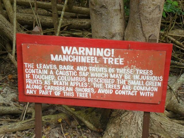 Một tấm biển cảnh báo cây có độc