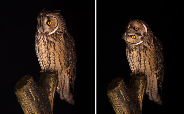 Chùm ảnh cho thấy lý do vì sao khi chụp ảnh chim thì không nên chụp từ phía trước
