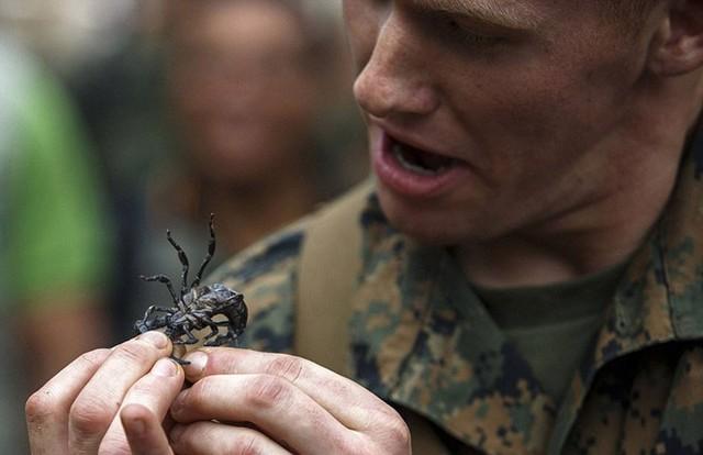 Bọ cạp sống cũng trở thành món ăn của binh sĩ trong rừng.
