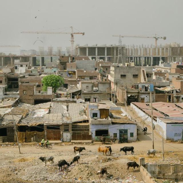 Một trang trại bò sữa nằm giữa một khu xây dựng khổng lồ và một bãi rác lớn. Gia súc liên tục phải tiếp xúc với ô nhiễm nên nguy cơ nhiễm bẩn các sản phẩm sữa đang trở nên ngày càng đáng báo động.