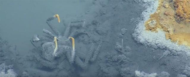 Hầu hết sinh vật khi tiến vào vùng nước đều có chung một kết cục