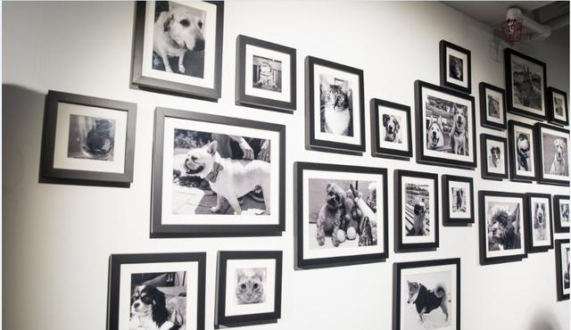 Và một bức tường treo đầy những bức ảnh nghệ thuật thú vị khác: bức tường của những con vật nuôi. Chính sách của công ty là các nhân viên không được phép mang thú cưng làm việc. Do đó, đội ngũ làm việc ở văn phòng Manhattan của LinkedIn đã thiết kế một bức tường vật nuôi thế này.