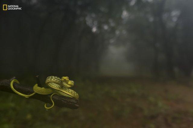 Chụp tại Amboli, Maharashtra, Ấn Độ vào ngày 24/7/2016, trong một buổi sáng khi nhiếp ảnh gia đang đi dạo trong rừng mưa nhiệt đới.