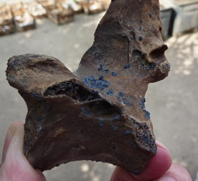 Hình ảnh của khoáng vật vivianite trên một mẩu xương được chôn vùi trong cát