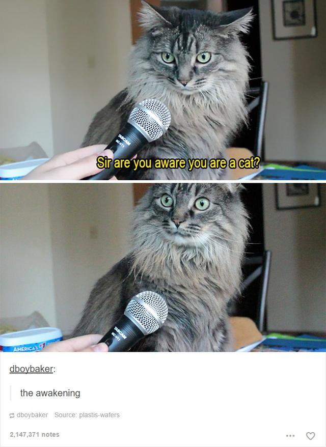 Ngài có tự ý thức được mình là một con mèo không?