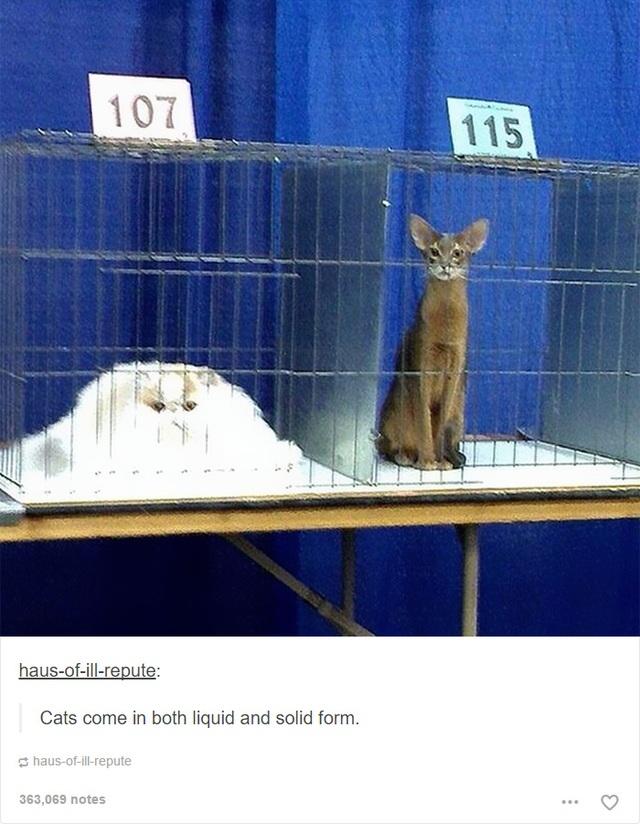 Mèo tồn tại ở cả thể lỏng lẫn thể rắn, mà ai đánh đổ cốc kem thế kia?