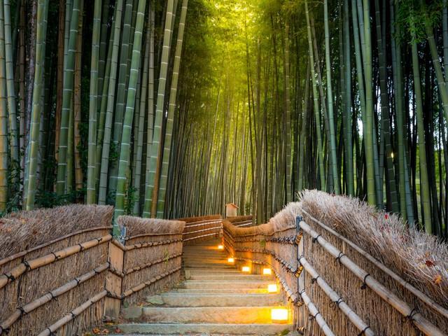Hình ảnh về Kyoto được chia sẻ nhiều nhất trên Instagram là những rừng tre rậm rạp, to khỏe, tràn đầy sức sống bền bỉ với thời gian tìm thấy ở huyện Arashiyama.