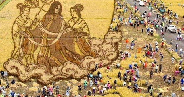 Cuối cùng, lúa sẽ được thu hoạch xung quanh phần tranh nghệ thuật, để du khách ngắm tác phẩm lâu nhất có thể.